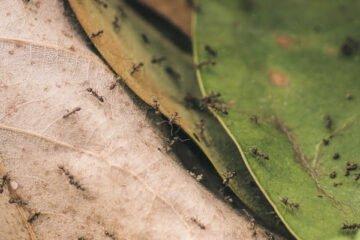 Ameisen beobachten