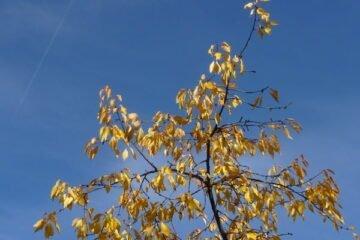 Naturwissenschaft in der Kita: warum werden Blätter bunt?