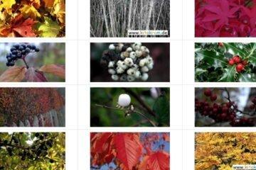 Farbschauspiel im Herbst