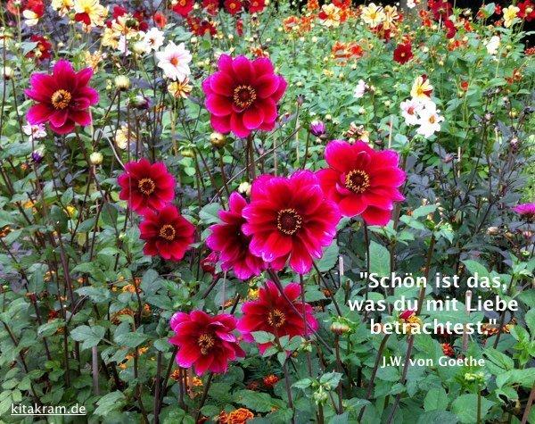 Zitat-Goethe.jpg