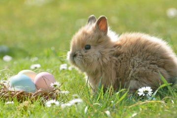 Hase oder Kaninchen: was ist denn da der Unterschied?