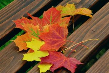 Warum färben sich Blätter bunt?